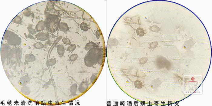 2400倍显微镜除螨除菌实测:美的H20WY烘干机=衣物净化器+除螨除菌仪?